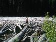 Canada 2006 - Monkey boy.
