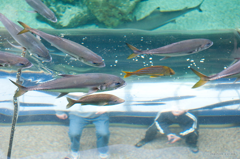 Our Wedding - We took Charlie to the Oceanarium in Bournemouth. He liked looking at the fish.