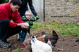 Gallery: Askrigg - Feeding the hens