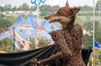 Pic: Glastonbury 2010 - Is there anyone that didn't take a photo of this fox at Avalon?